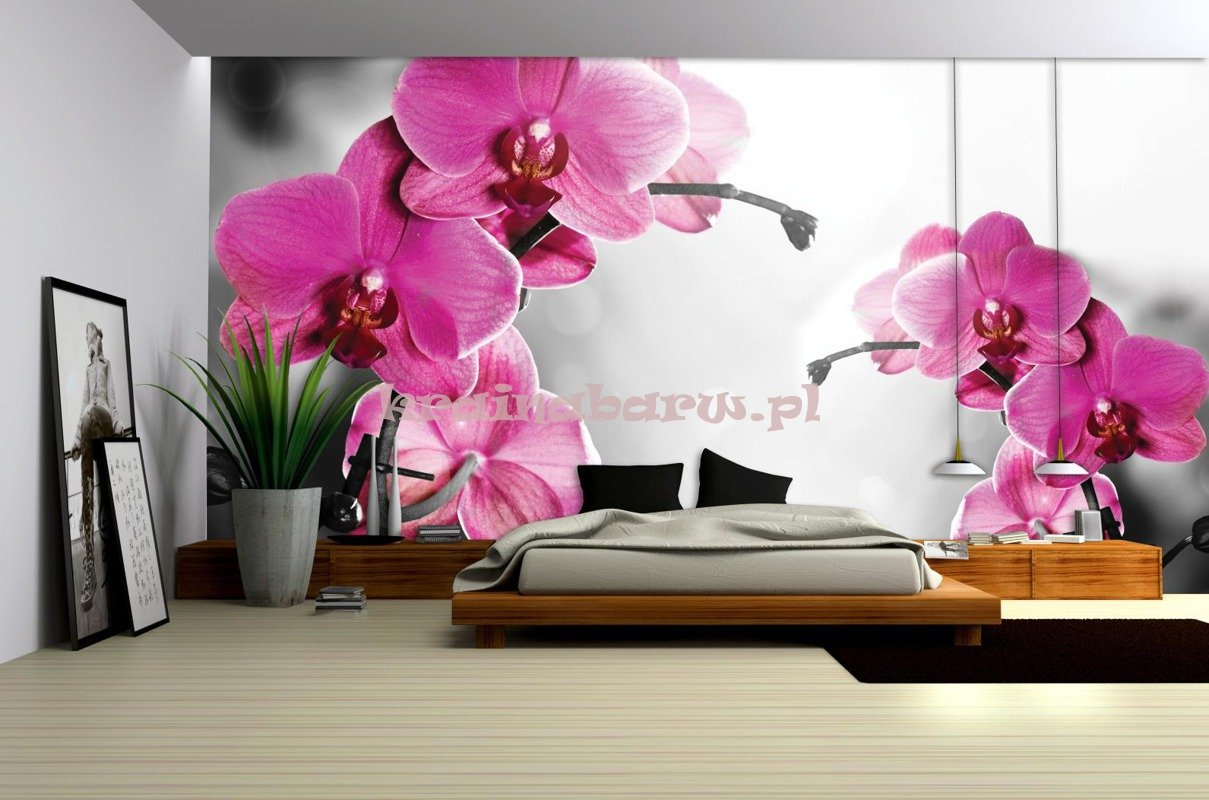 fototapeta na flizelinie 1034ve storczyk. Black Bedroom Furniture Sets. Home Design Ideas